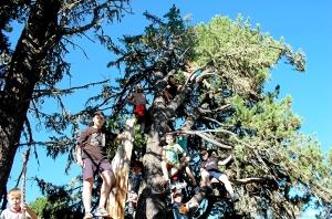 26 На дереве